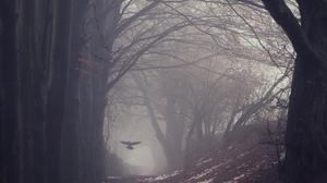 Raven Bird Flying, Trees, Path, Gloomy, Winter Wallpaper Image High Quality