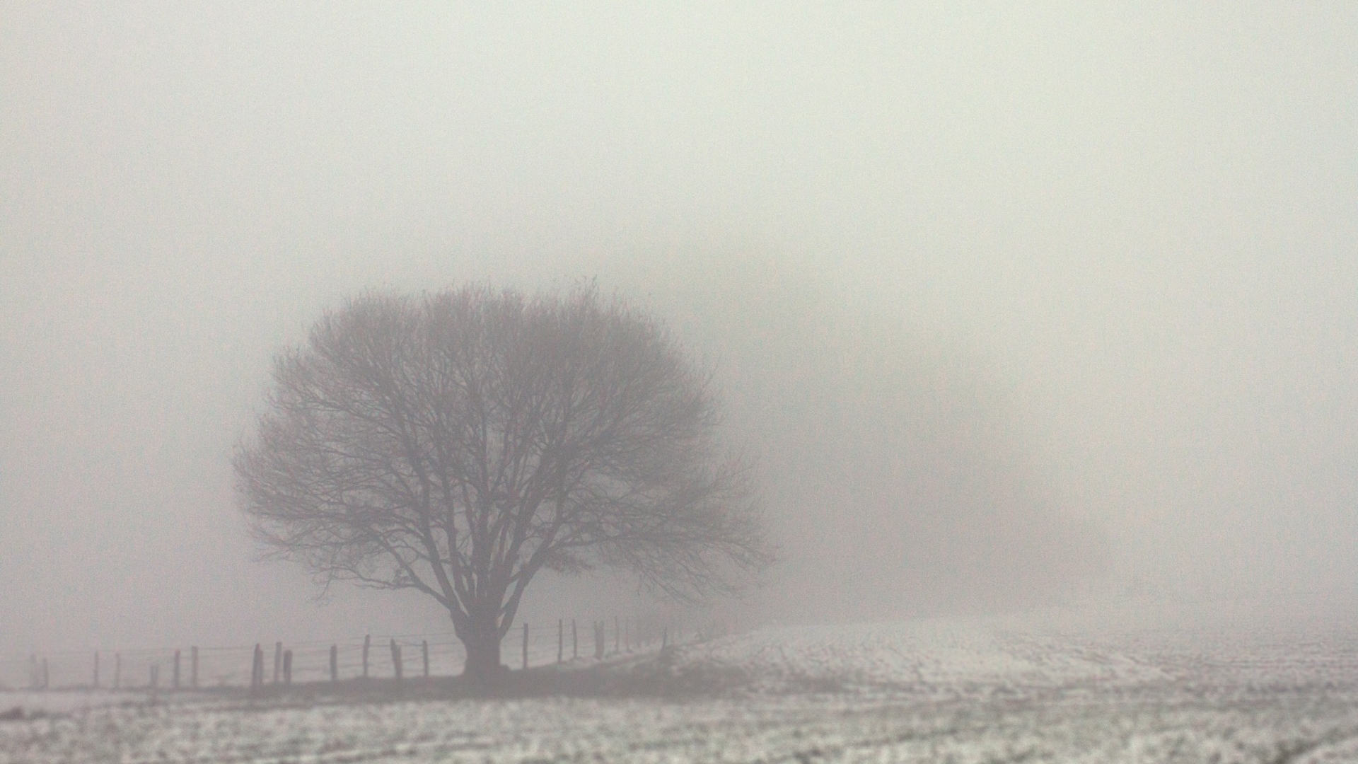 battlefield,domain,winter,,tree,,single,weather,cold,mist,subject,discipline,field of battle,battleground,winter,field of force,field,,fog,,city,scenery,field of operation,nature,scene,gloomy,germany,bergischesland,solingen,arena,tree,field of view