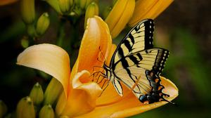 Yellow Flower With Butterfly Download HD Wallpaper