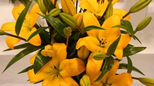 Lilies Yellow Buds And Leaves Hd HD Image Free Wallpaper