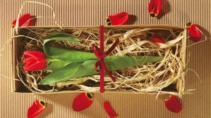 Gift Box Tulip Flower And Petals Background Wallpaper Free Photo
