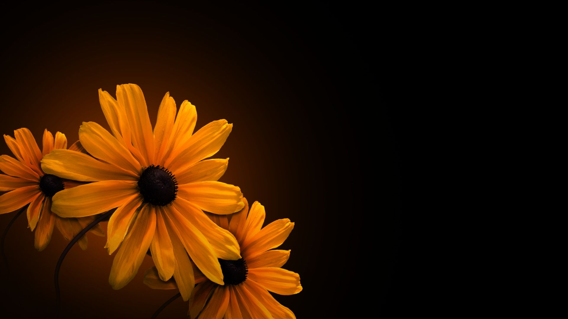 Yellow Flowers With Dark Background ...