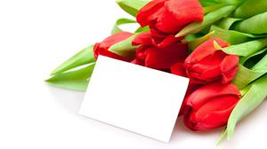 Tulips Bouquet With Blank Card Download Free Image