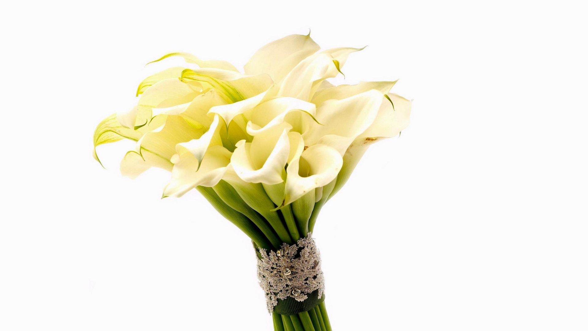 prime,lilies,blossom,arum lily,efflorescence,bouquet,of,calla,peak,flush,redolence,flowers,sweetness,lily