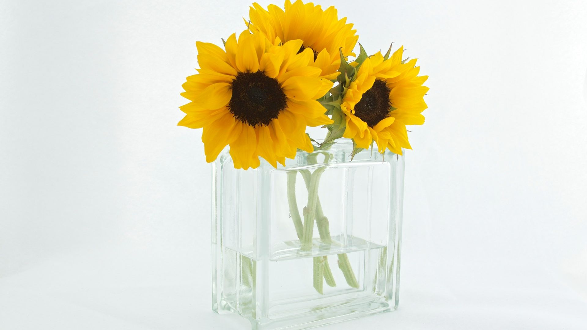 prime,in,sunflower,blossom,efflorescence,vase,helianthus,peak,flush,flowers,bloom,heyday