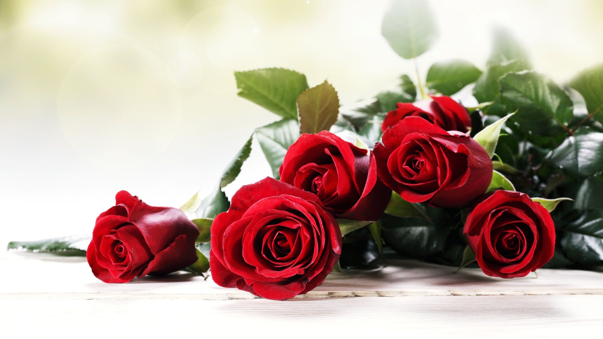 Rose With Background Wallpaper Download Free Mewallpaper