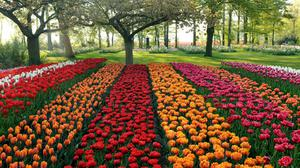 Different Color Tulips In Park Wallpaper Image High Quality