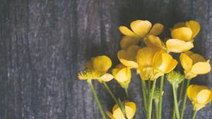 Yellow Buttercup Flowers On Grey Surface Free Photo Wallpaper