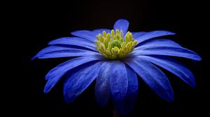 Blue Awesome Flower Wallpaper Free Photo