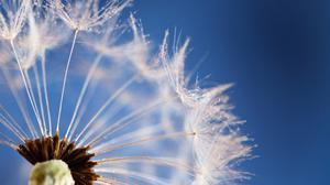 Dandelion And Sky Close Up Background Wallpaper Image High Quality