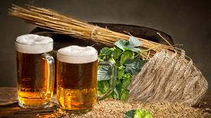 Wheat And Beer Glasses Wallpaper Download Free