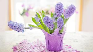 Easter Holiday 2020, Potted Hyacinths, Home... Free Download Wallpaper HD