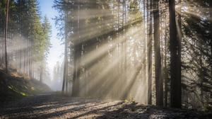 Sunbeam Coming From Trees In Forest Wallpaper Download Free