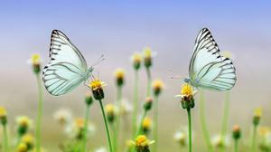 Butterflies On Flowers Spring Nature Hd HD Image Free Wallpaper