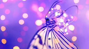 Butterfly Near Lights Closeup Free Download Image