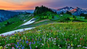 Mountain Wildflowers Spring Nature Wallpaper Download Free