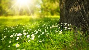 Sunrise Spring Flowers And Green Grass HD Image Free Wallpaper