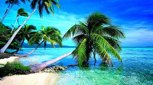 Palm Tree Beach Background HD Image Free Wallpaper
