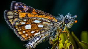Macro Photo Of Butterfly Wallpaper Image High Quality