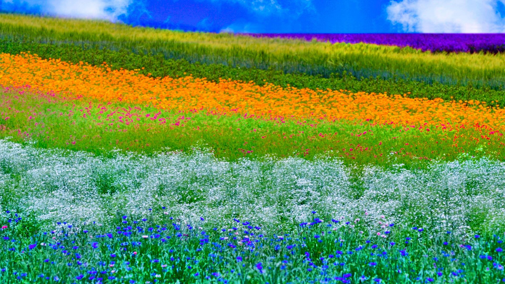 meadow,colorful,nature,spring,bounce,outpouring,roan,springiness,natural state,recoil,fountain,vernal,hayfield