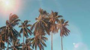 Palm Trees Under Blue Cloudy Sky Summer Free Transparent Image HQ
