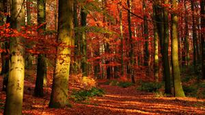 Gleams In Forest And Leaves Trees Autumn Hd Free Transparent Image HQ