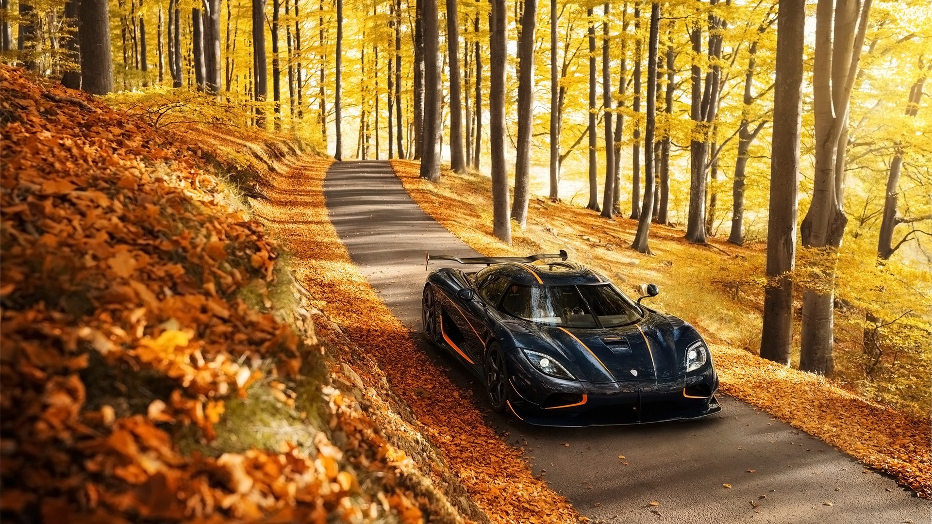 and,thought,vista,sentiment,rs,universe,koenigsegg,trees,natural state,autumn,survey,perspective,fall,position,cosmos,view,nature,agera