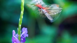 Flowers And Mid Air Butterfly HQ Image Free Wallpaper