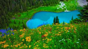 Spring Lake Flowers Landscape Hd Free Transparent Image HQ