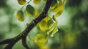 Green Leafed Tree With Water Droplets Free HD Image
