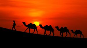 Arabian Camels Sunset Free Wallpaper HQ