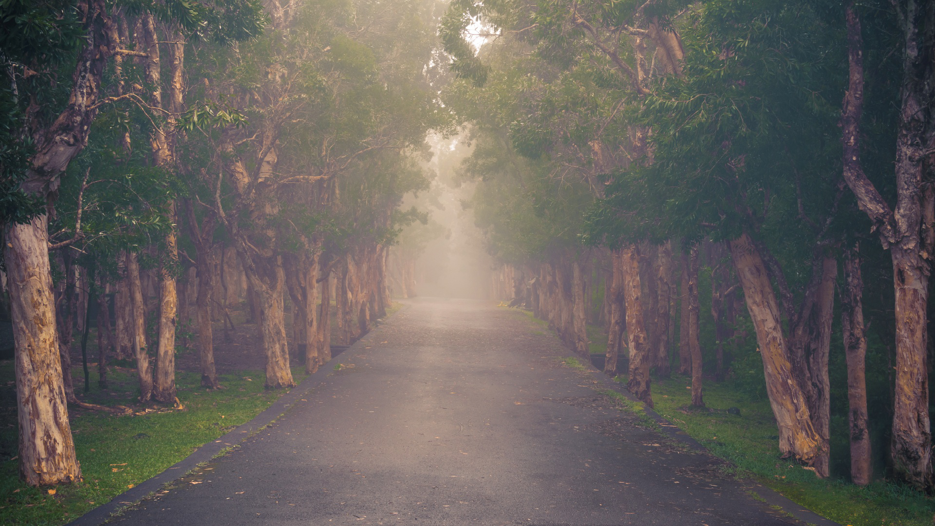 woods,nationalpark,world,mist,natural phenomenon,cloud,timber,highhumidity,chemingrenier,fog,tropical,wood,alexandrafalls,forest,dapple,blackrivergorgesnationalpark,evergreen,nature,trees,cloudforest,foggy,universe,route,mauritius,forest,,green,jungle,rainforest,road