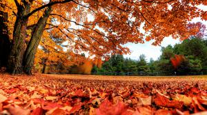Leaves And Tree Autumn Nature Download HQ Wallpaper