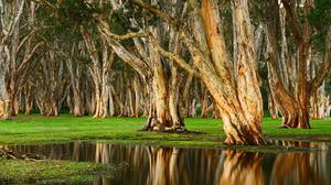 Old Trees Swamp Download Free Image