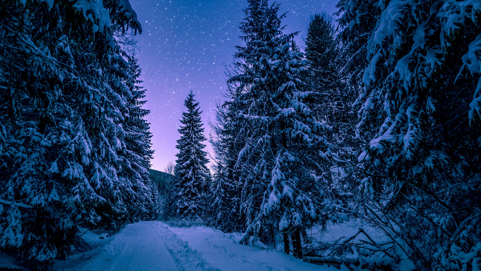 winter,,firtrees,creation,snowfall,snow,,woods,spruce,natural state,cold,landscape,fir,fir tree,scenic,snowy,snow,pine,wood,forest,stars,nightsky,scenery,conifers,nature,coke,frost,freezing,trees,dark,nox,winter,frozen,universe,tree,forest,,night