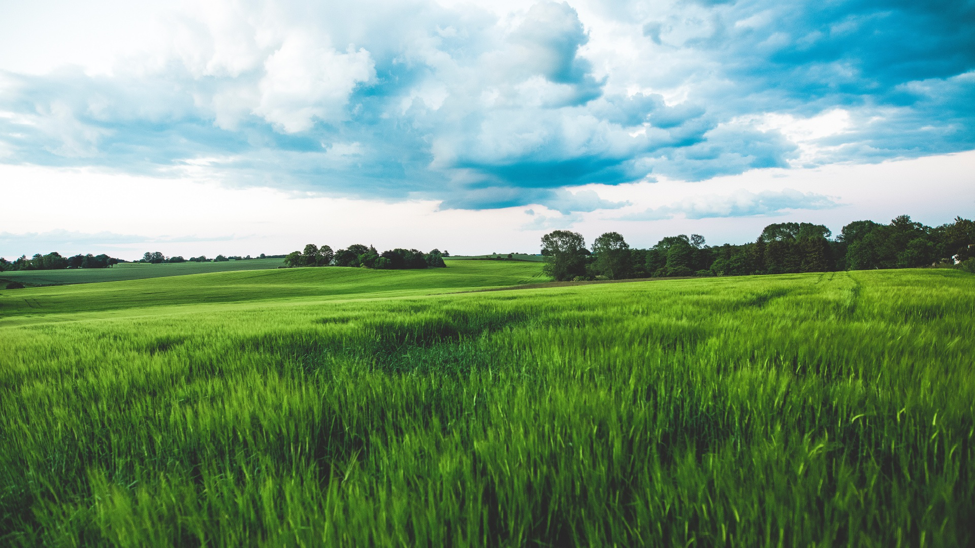 Green Wheat Field Rain Clouds Sky Free Wallpaper Hq Mewallpaper