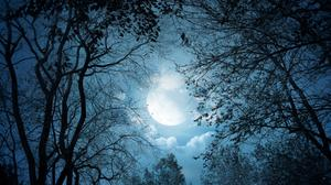 Tree Branches And Moon Night View Download HQ Wallpaper